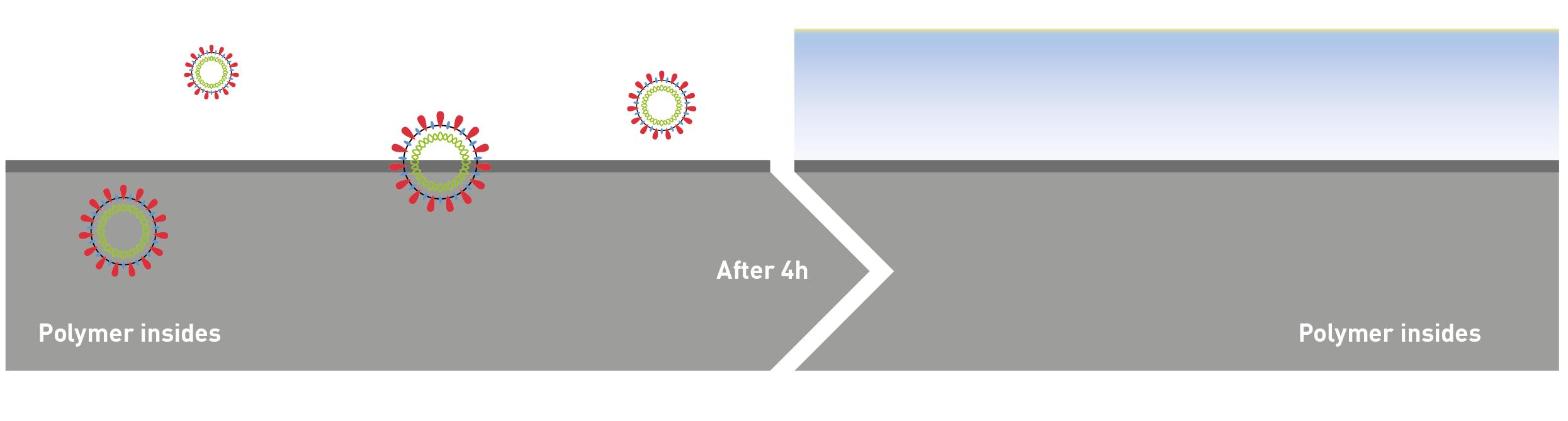 VI_SAFE Antiviral activity after 4h exposure